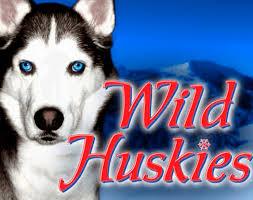wild-huskies-logo1