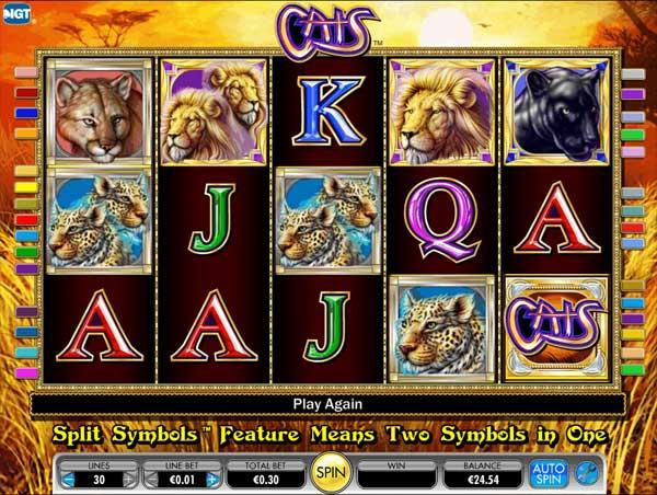 cats slot2