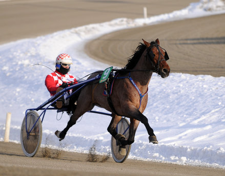 horse-racing-trav-stall-sjostrom